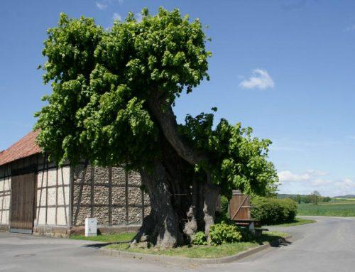So erhalten Sie Ihren schönen alten Baum